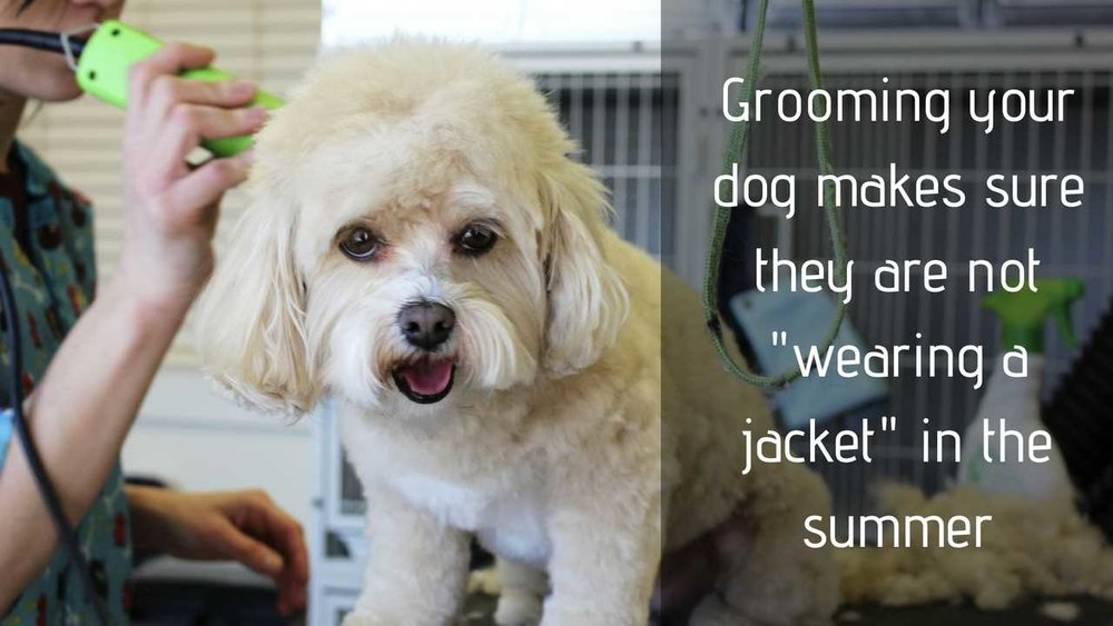 Grooming your dog makes sure they are not wearing a jacket in the summer and makes sure they stay cool in hot weather
