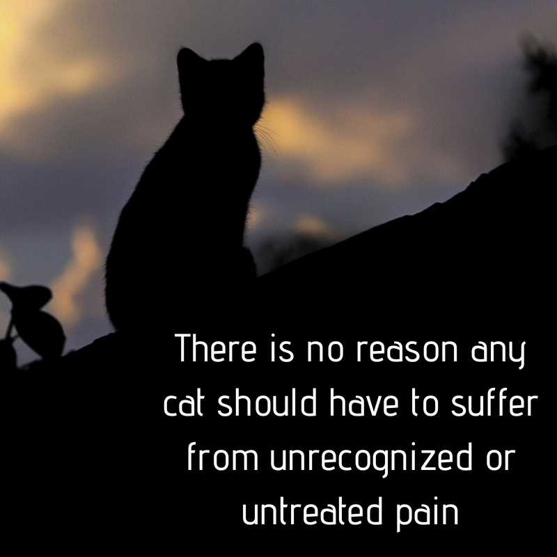 There is no reason any cat should have to suffer from unrecognized or untreated pain, learning these signs of pain in cats will help make sure that doesn't happen