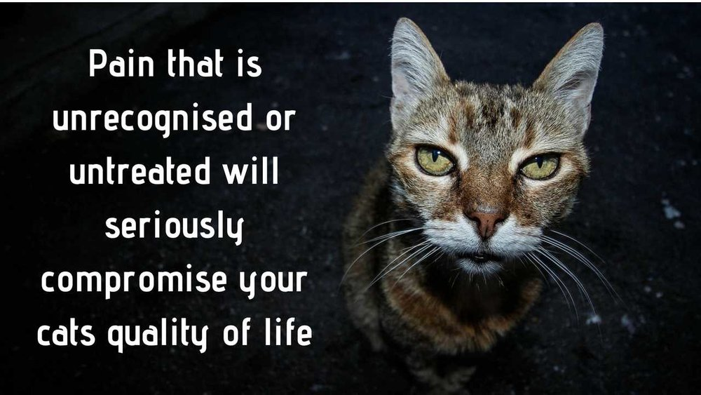 Pain that is unrecognized or untreated will seriously compromise your cats quality of life