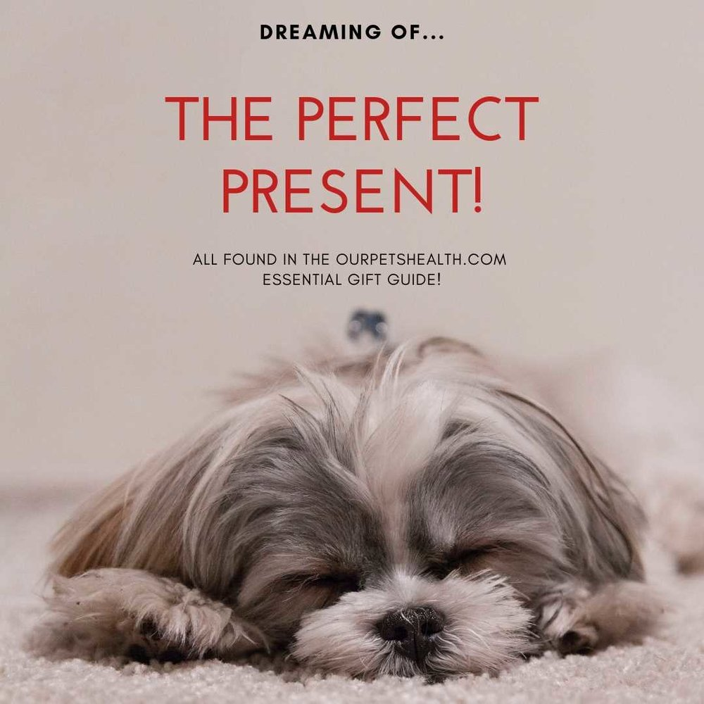 a dog dreaming of the perfect Christmas present
