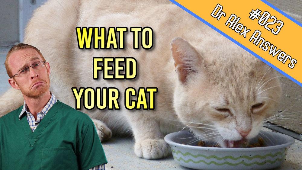 DAA what to feed a cat.jpg