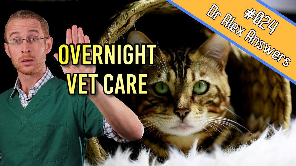DAA overnight vet care.jpg