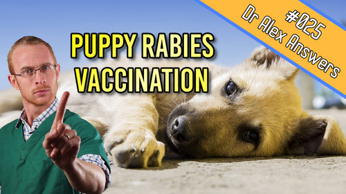 When Should You Really Vaccinate Your Puppy Against Rabies Our