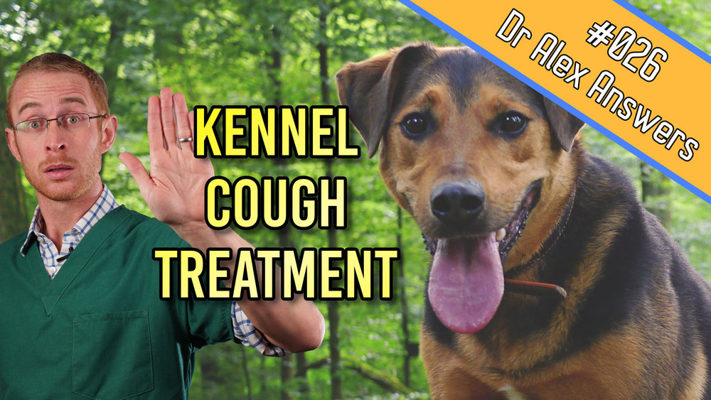 DAA kennel cough treatment.jpg