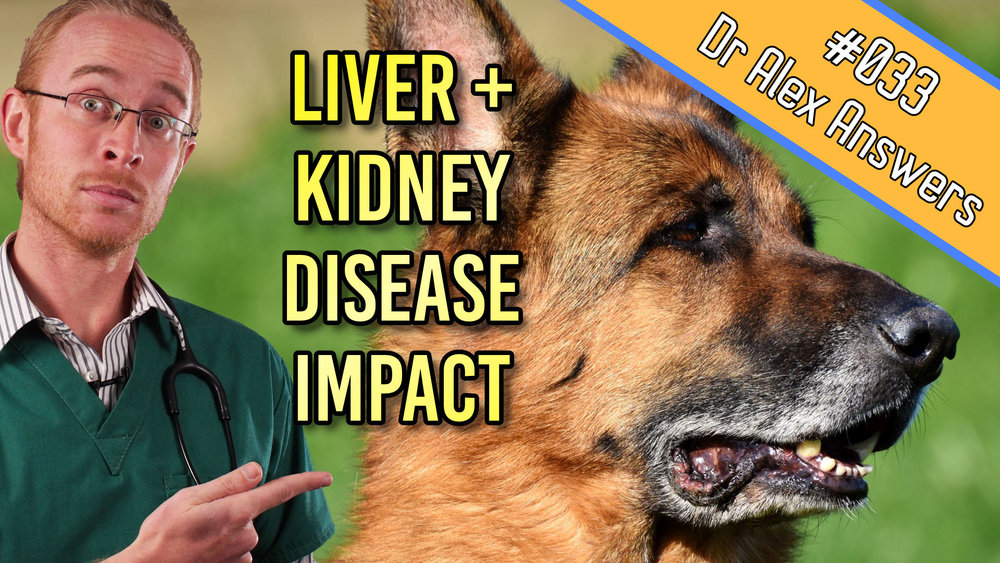the impact of liver and kidney disease
