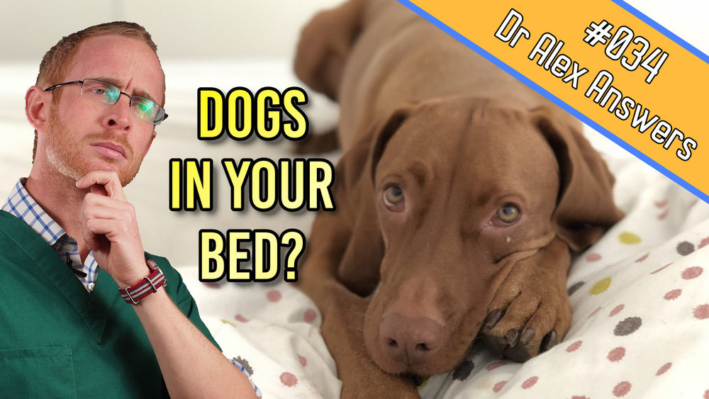 DAA dogs in your bed.jpg
