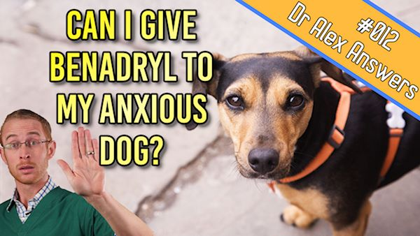 Treating Dog Anxiety with Benadryl (is it safe and does it