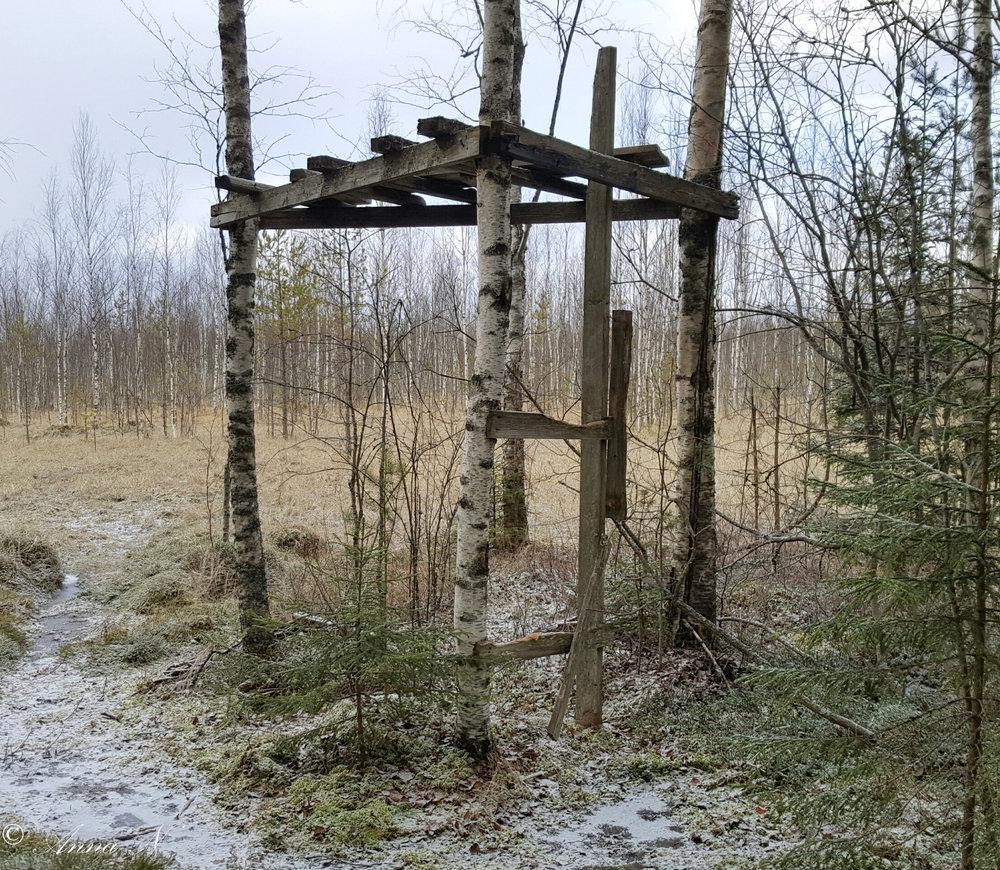 Lintutornin rauniot, Kotojärvi