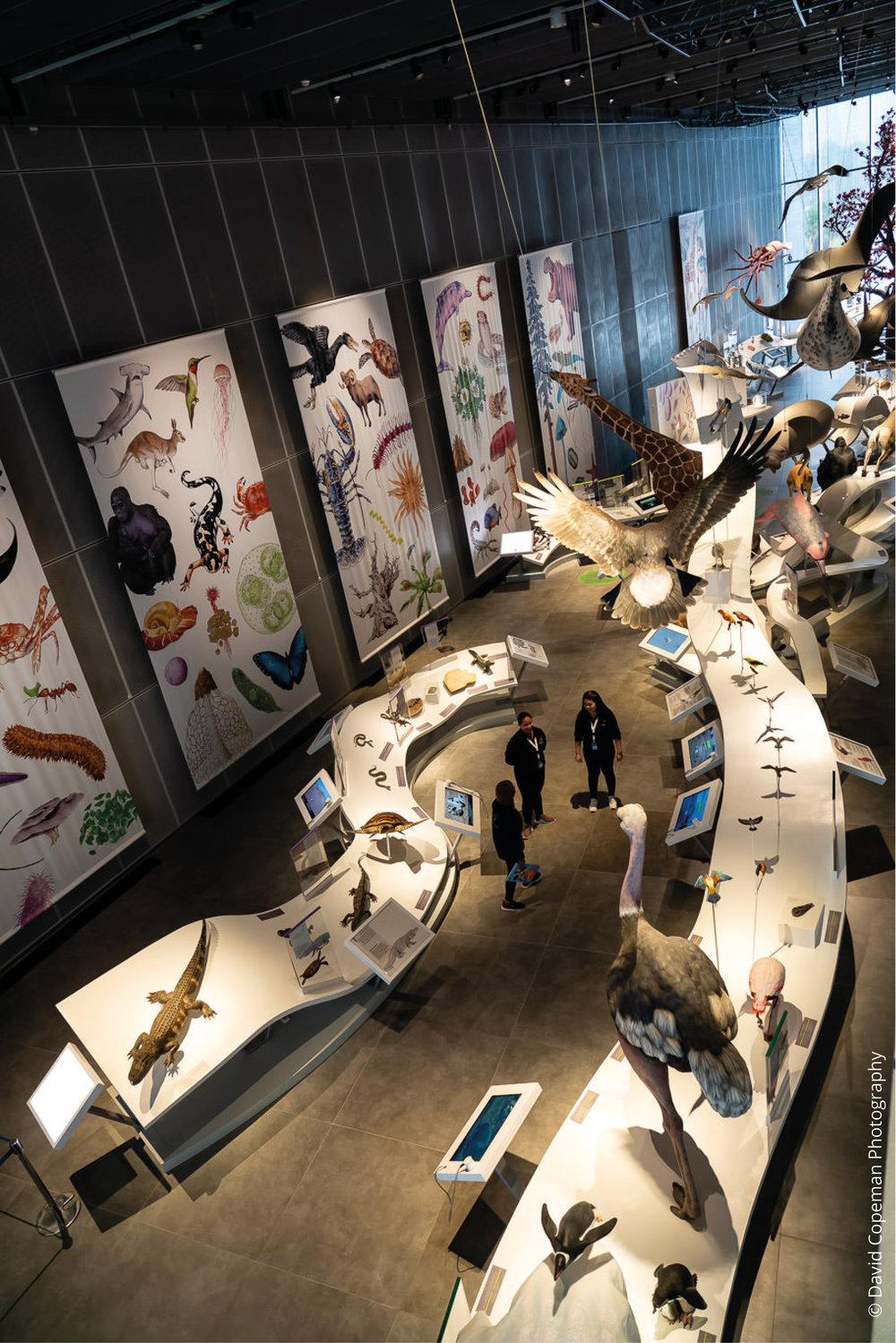 Sheikh Abdullah Al Salem Cultural Centre Brilliant Biodiversity gallery © David Copeman Photography