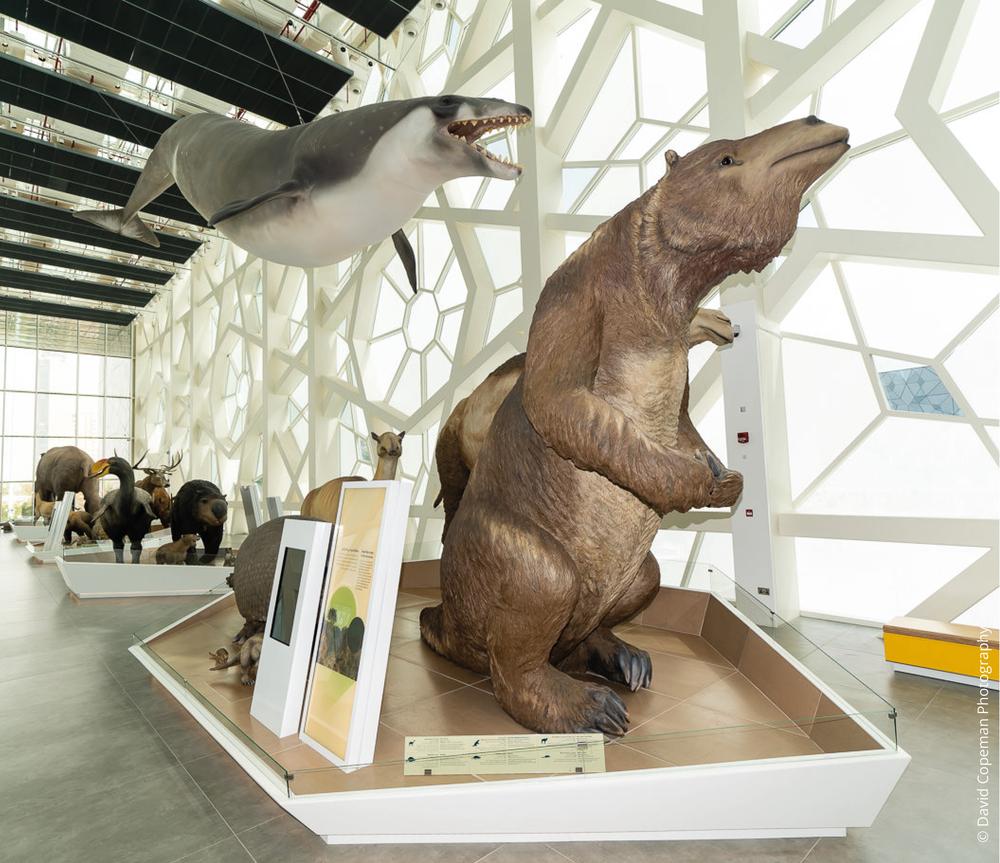 Sheikh Abdullah Al Salem Cultural Centre Age of Mammals gallery ©  David Copeman