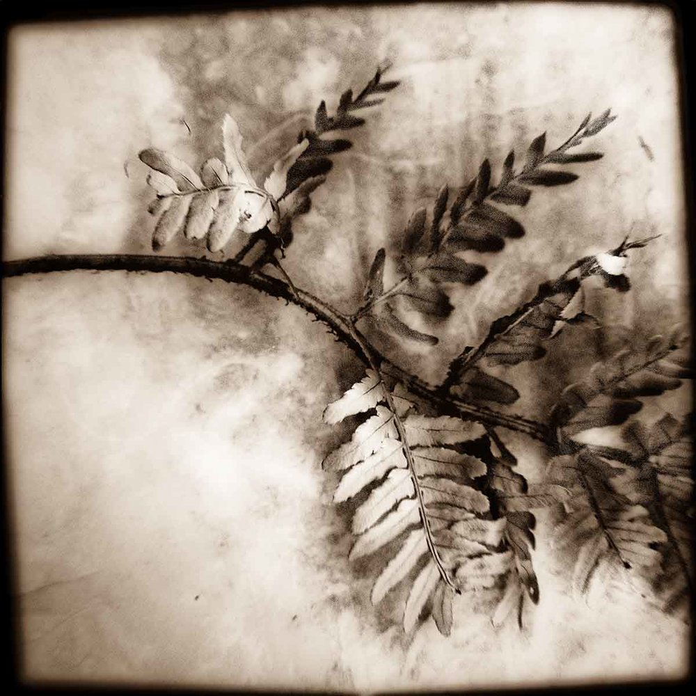 painted-fern.jpg