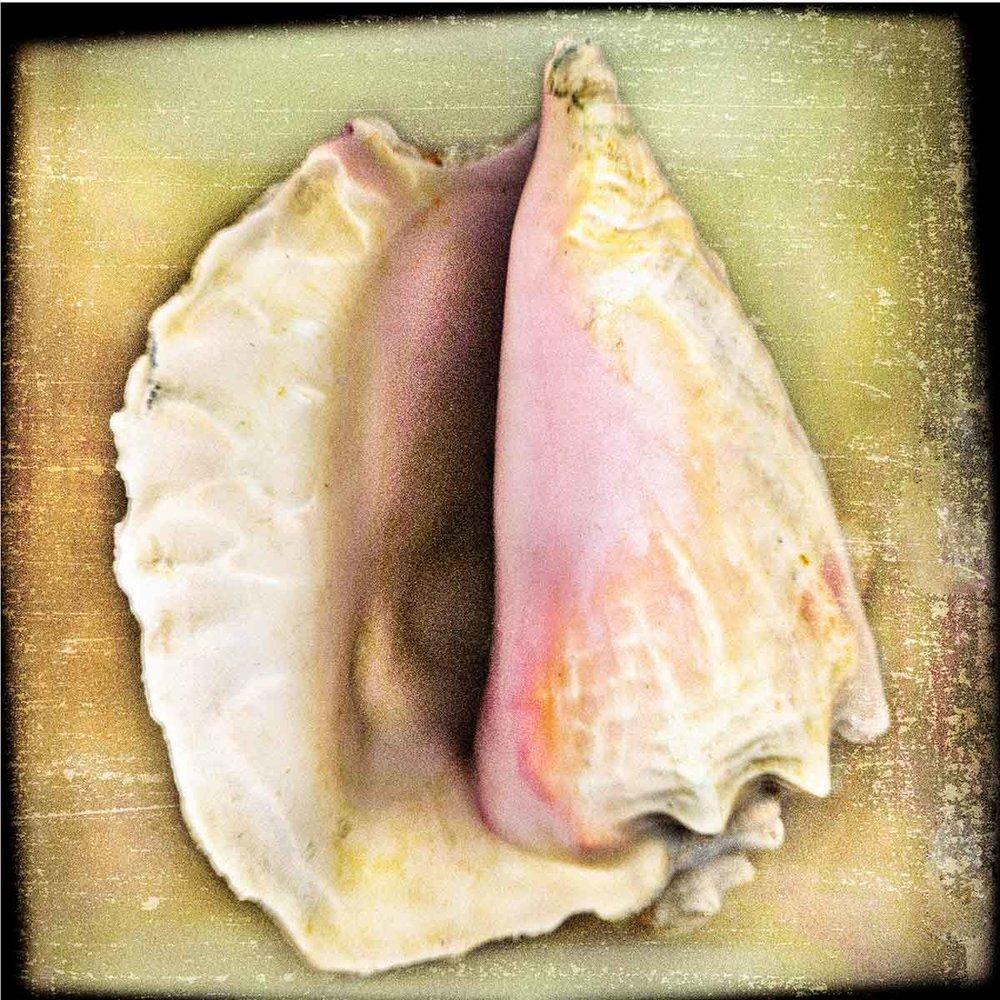 maine-shell.jpg