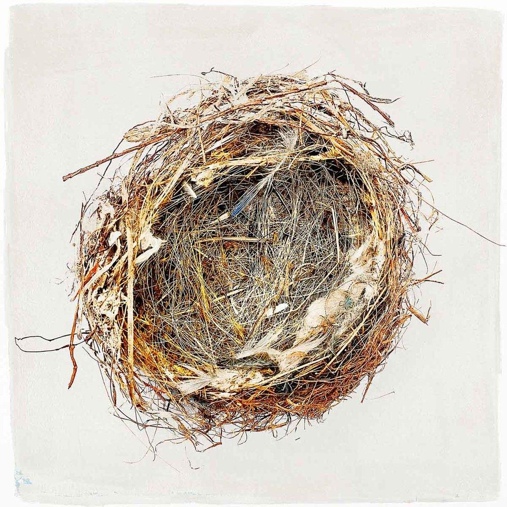nest-#01.jpg