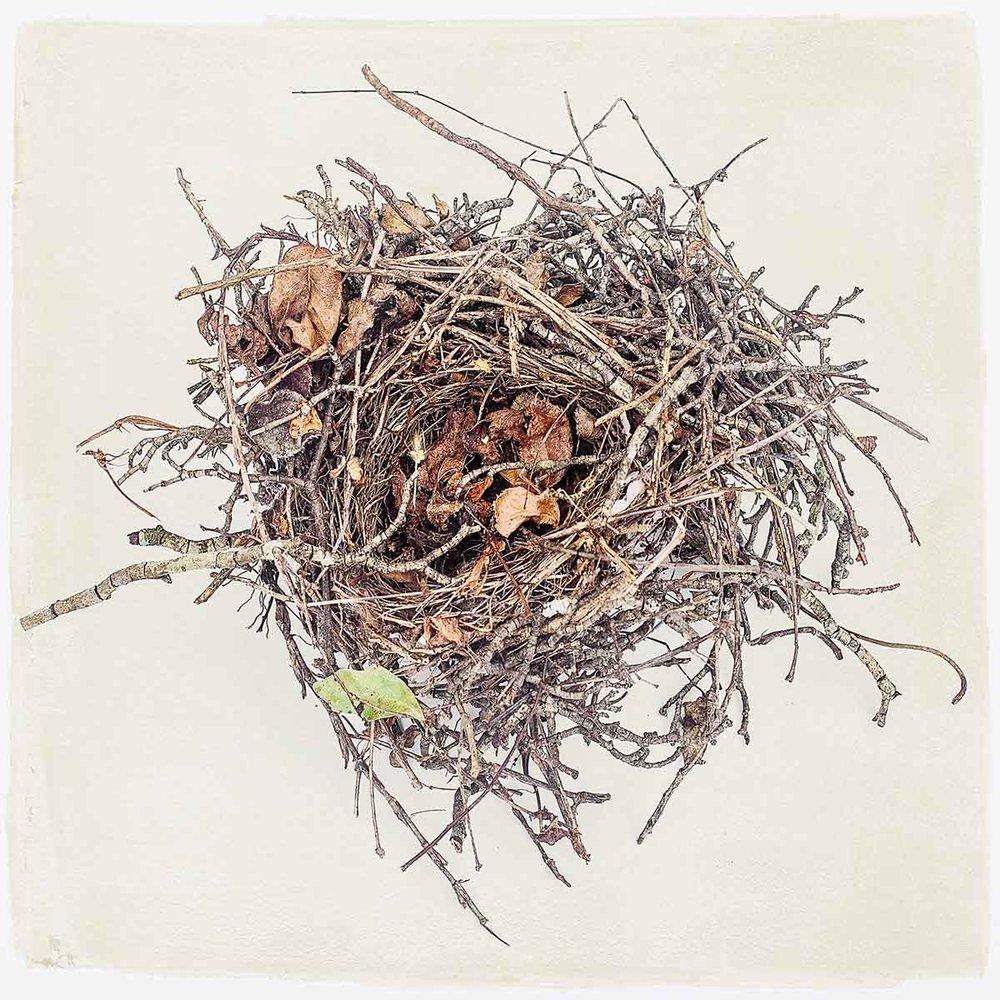 nest-#08.jpg