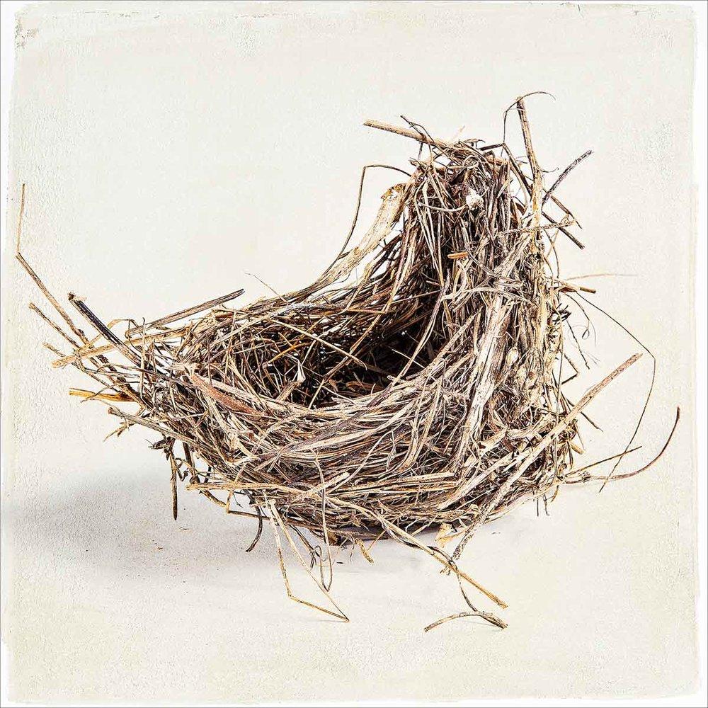nest-368.jpg