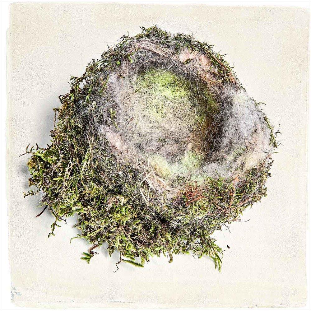 nest-2388.jpg