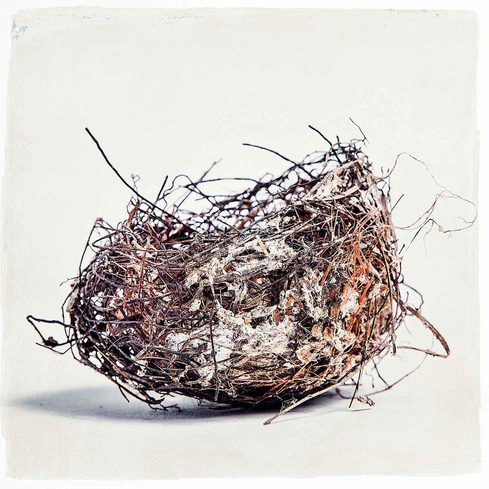 nest-3760.jpg