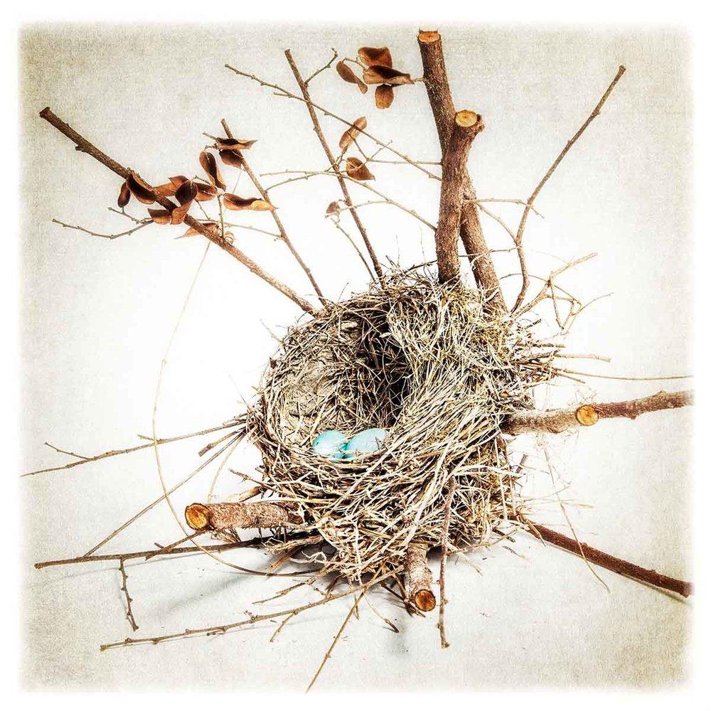 robins-egg-6169.jpg