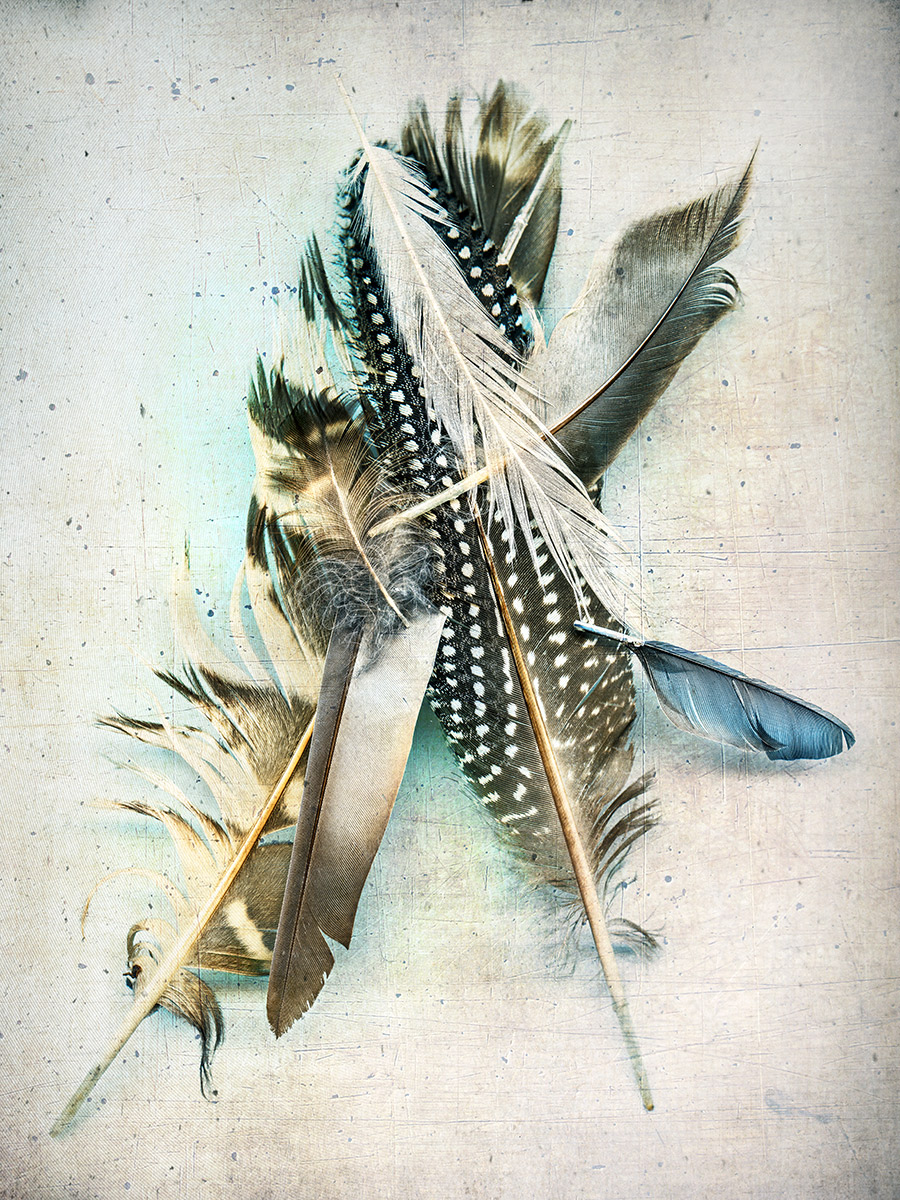 one blue feather.jpg