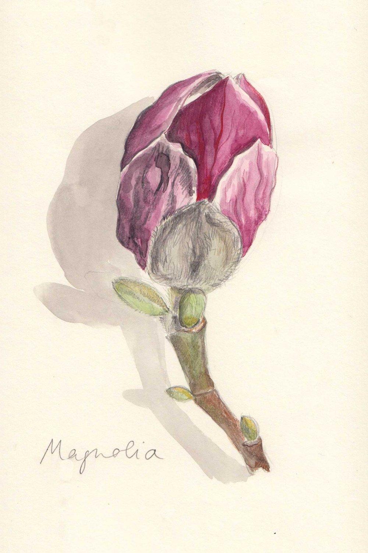 Sq_magnoliaclean.jpg