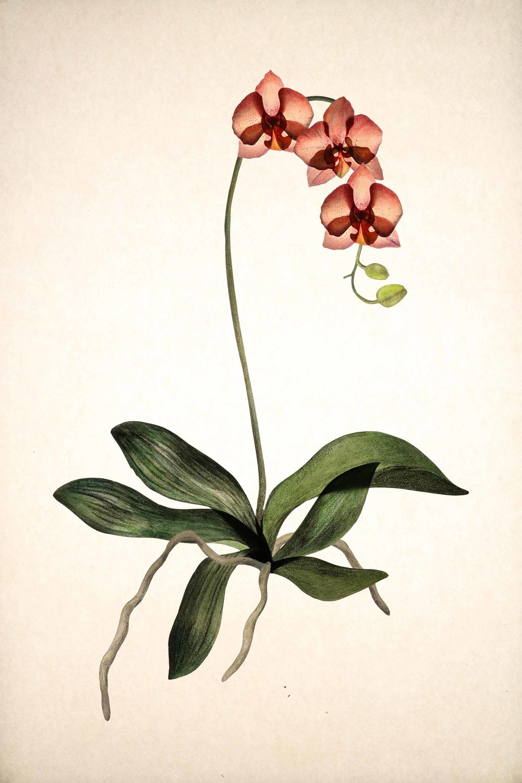 Sq_Orchid.jpg