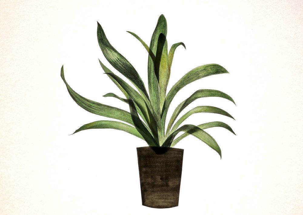 Sq_Greenplant 2.jpg