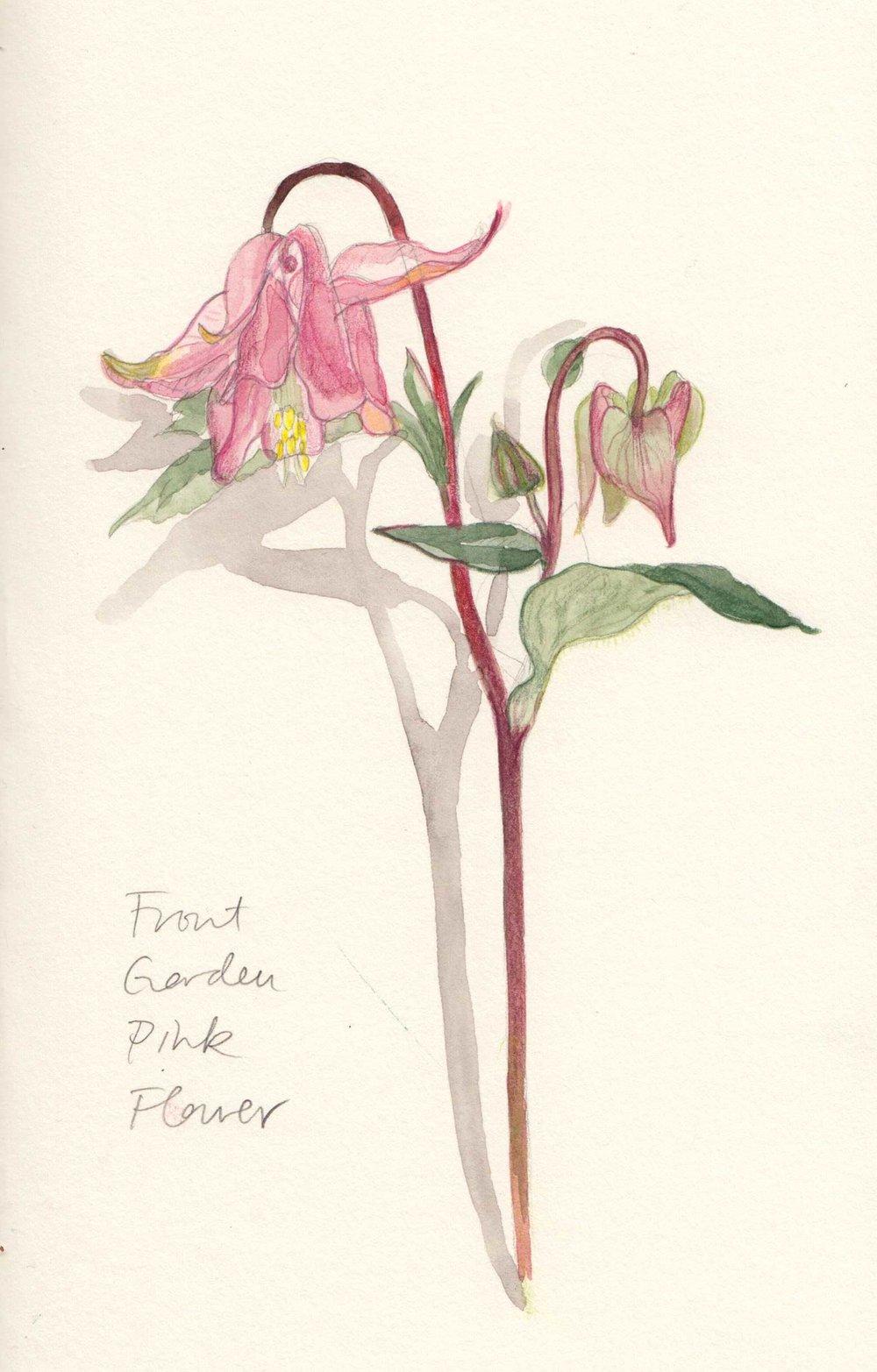 Sq_Pinkflower.jpg