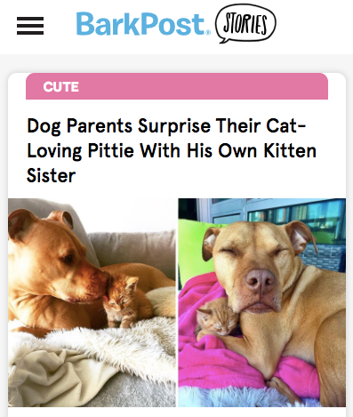 BarkPost.png