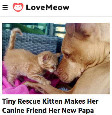 Love Meow.png