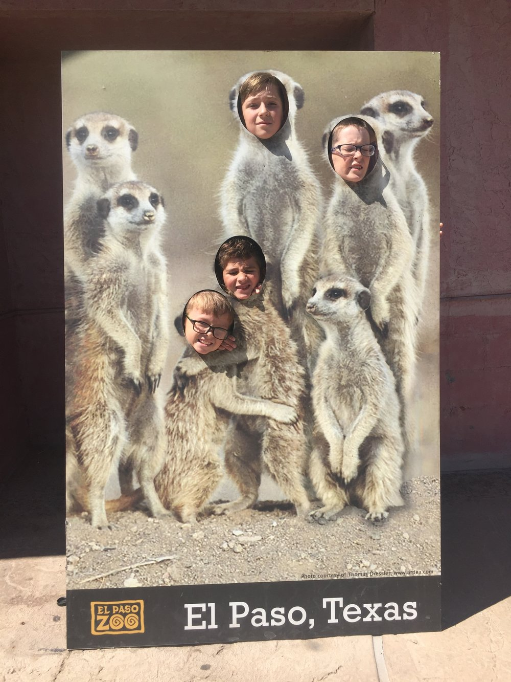 Look at these cute meerkats we found!