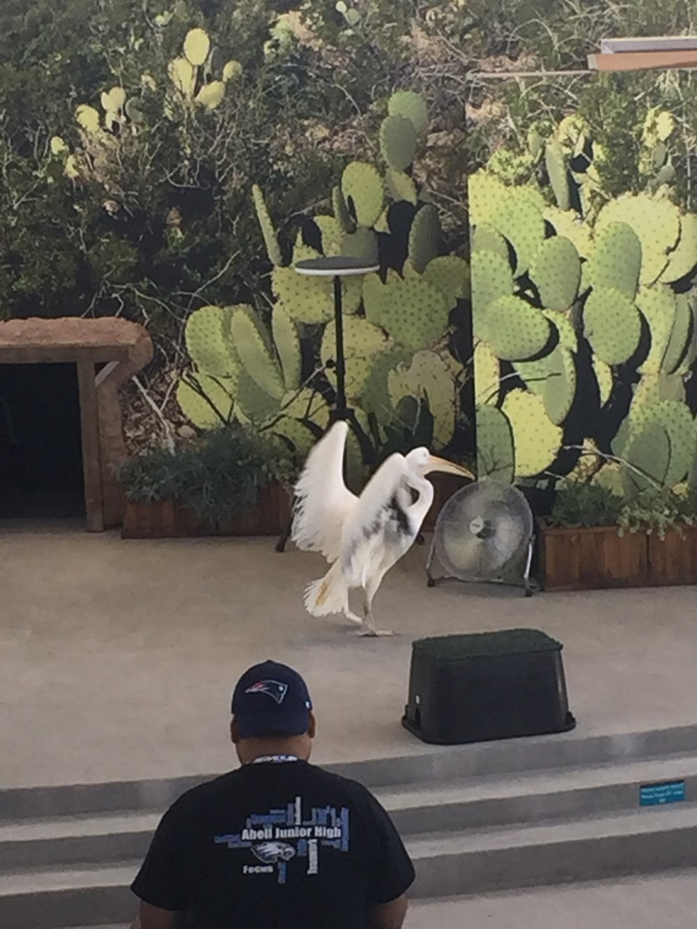 This pelican wanted to play in the fan and not participate in the bird show. Ha ha!