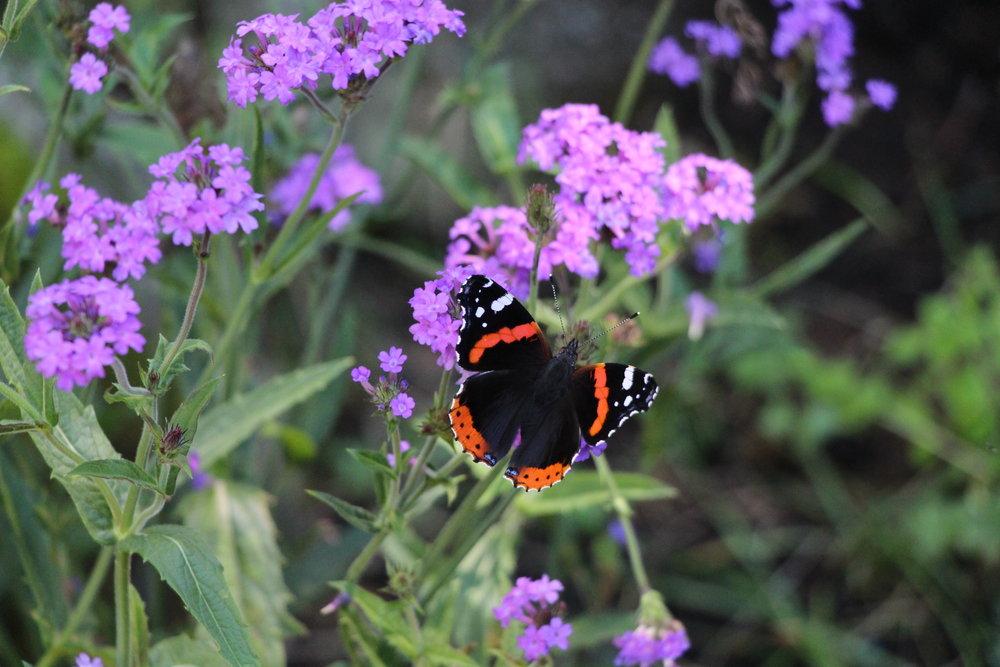 Schmetterling im Garten des Atelierhaus Am Villaberg