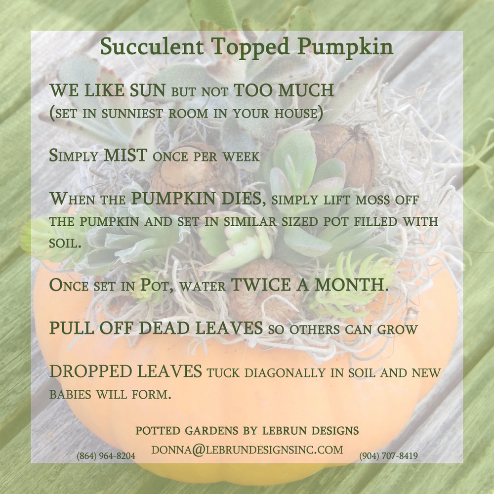 pumpkin succulent copy.jpg