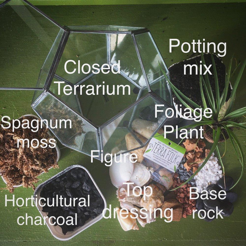 Closed Terrarium Viva Anderson Lebrun Designs