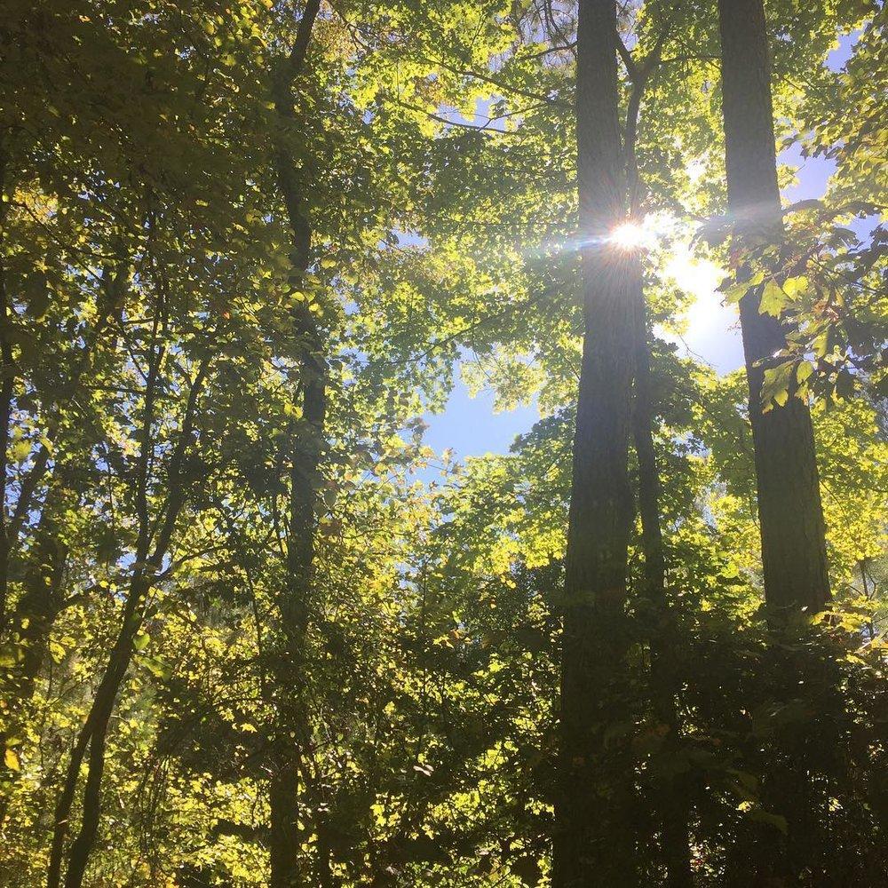 robyn_trees.jpg