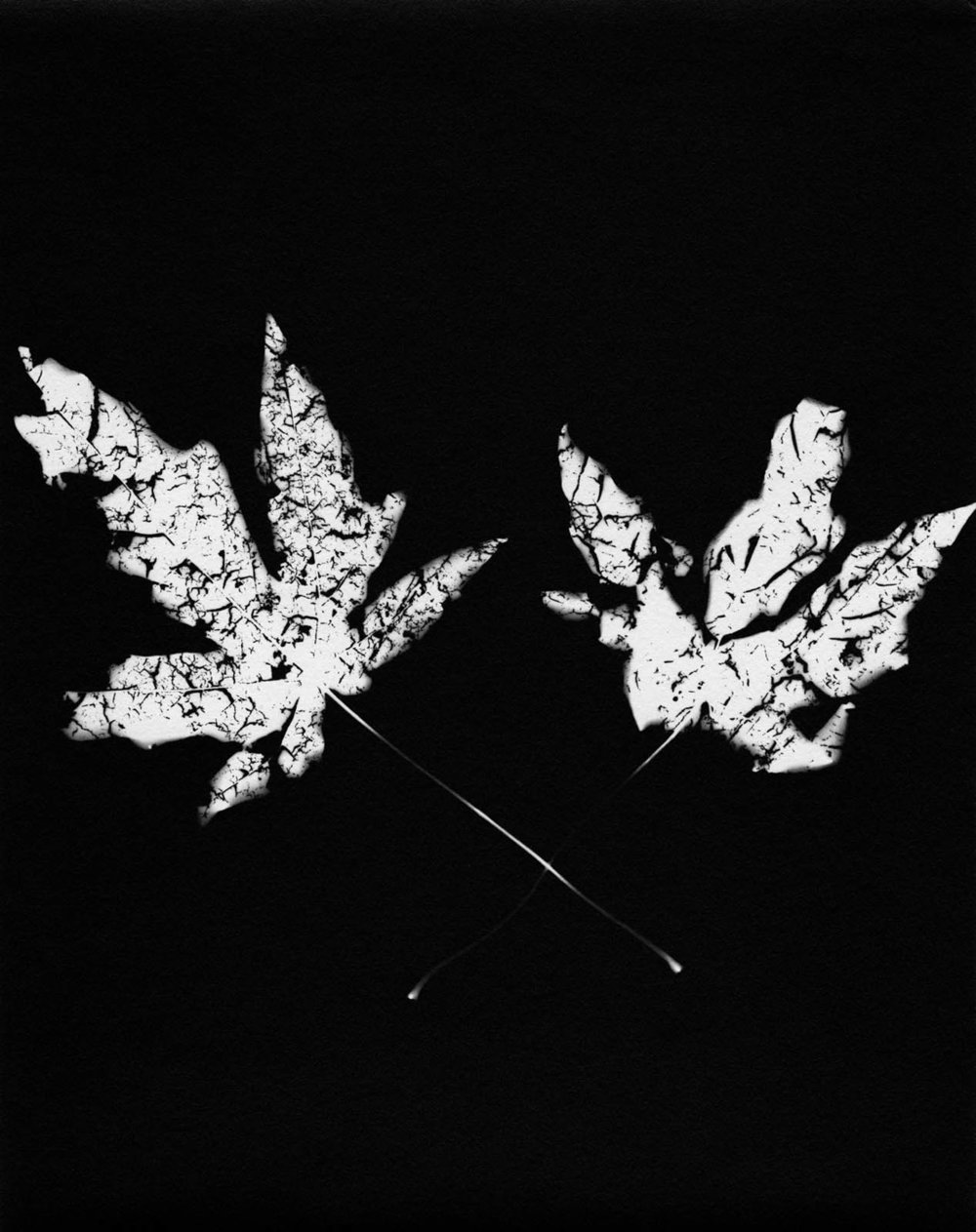 Leaf #11