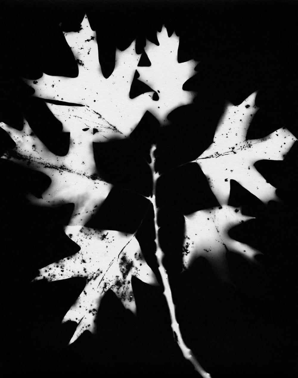 Leaf #12