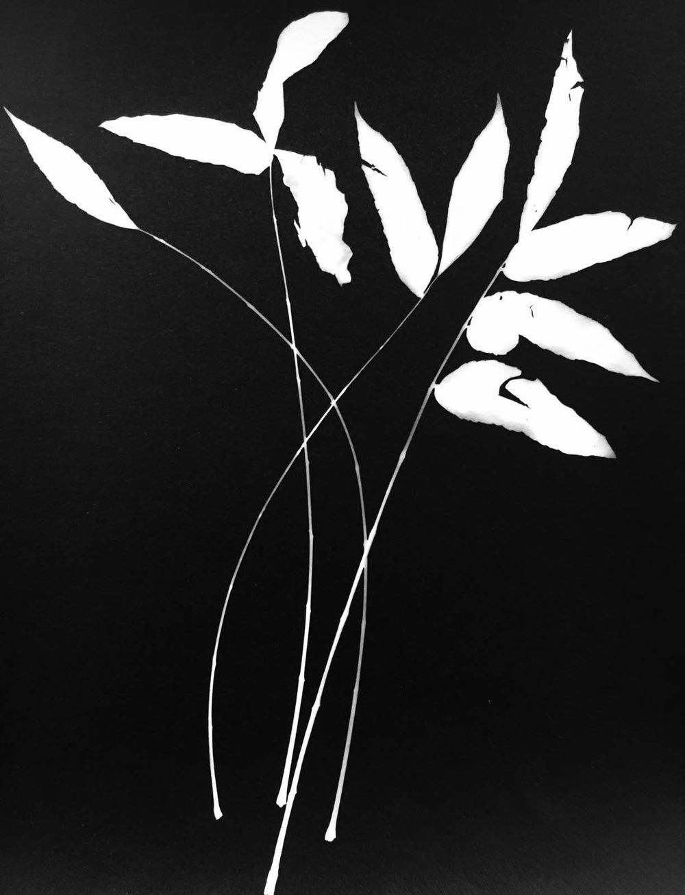 Leaf #75