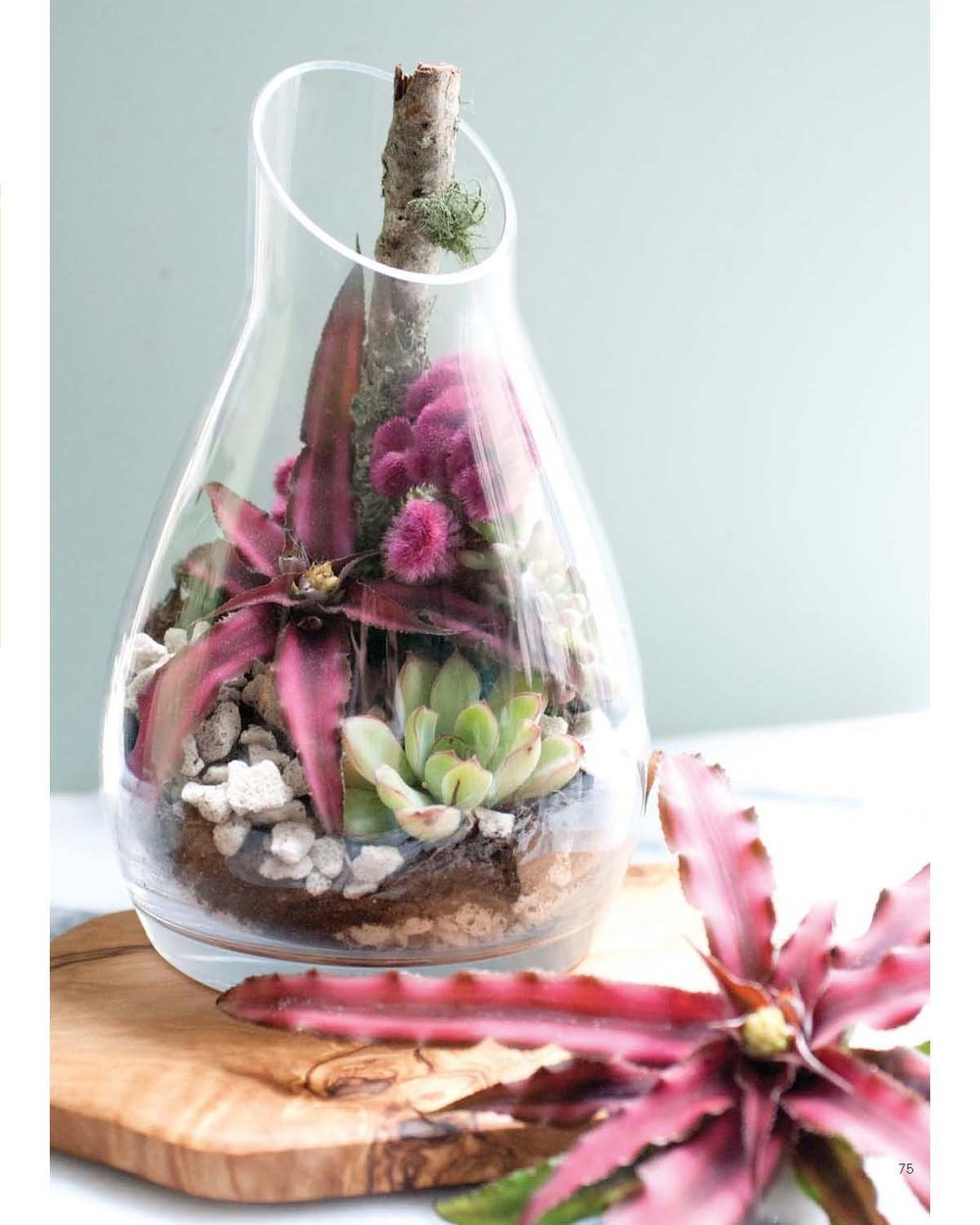 Modern Terrarium Studio - The Star in the Jar beauty image