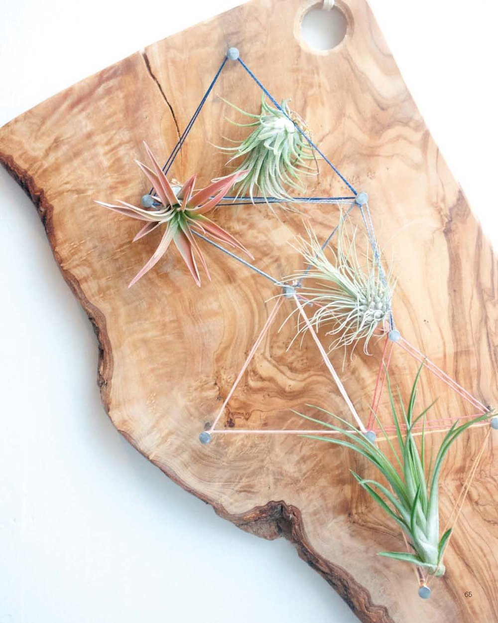 Modern Terrarium Studio - Wooden Geometry beauty image