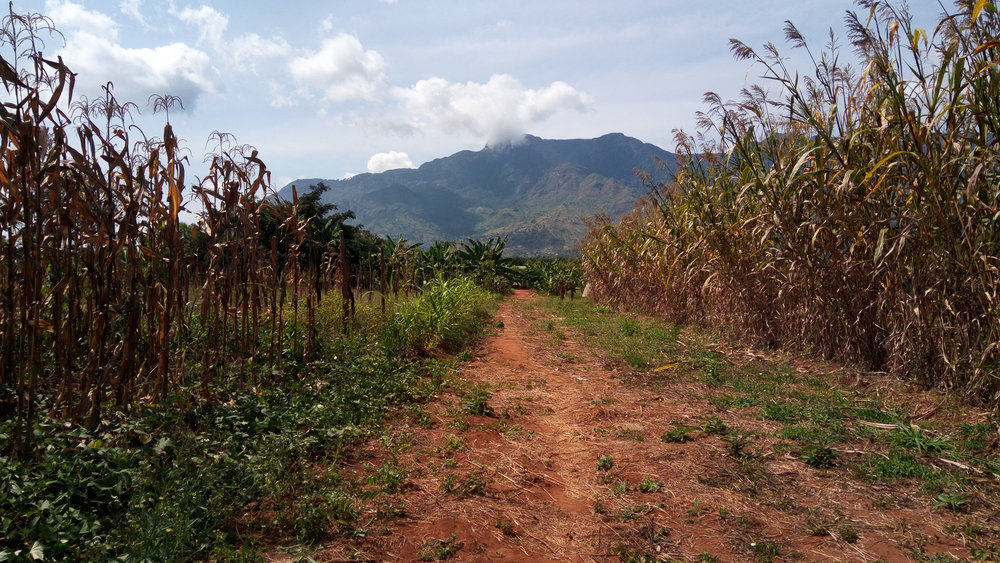 farm1b.jpg