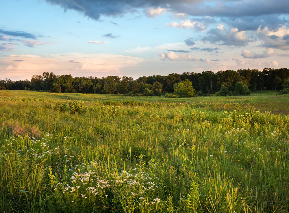 PGT_Early Summer Prairie_lowres.jpg