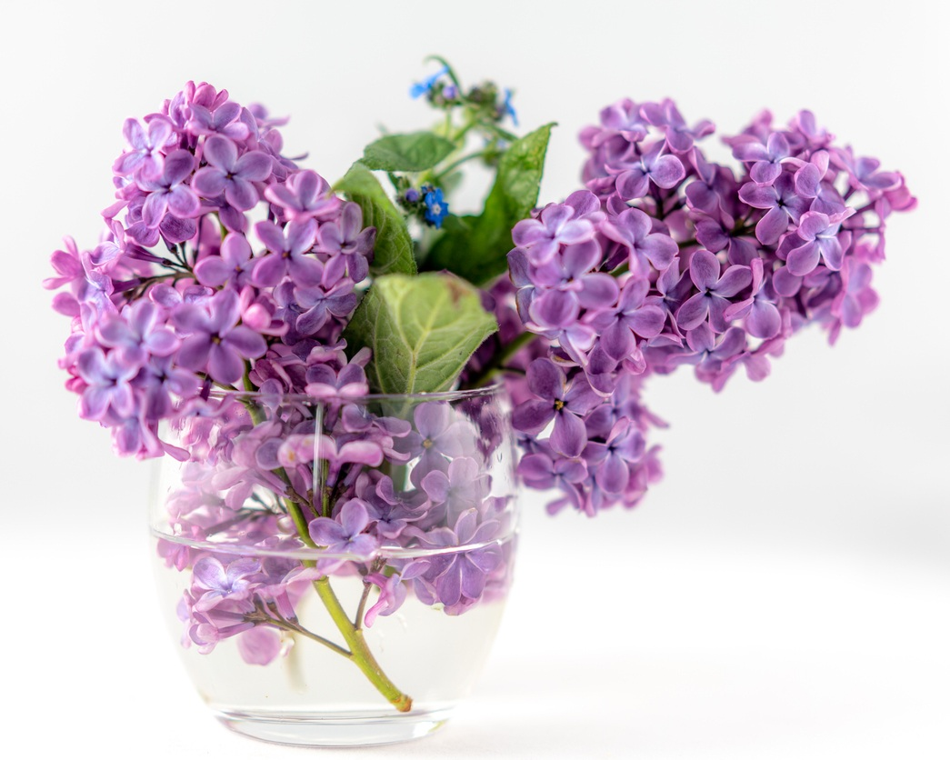 How To Keep Cut Flowers Fresh This Spring Leslie Town Centre