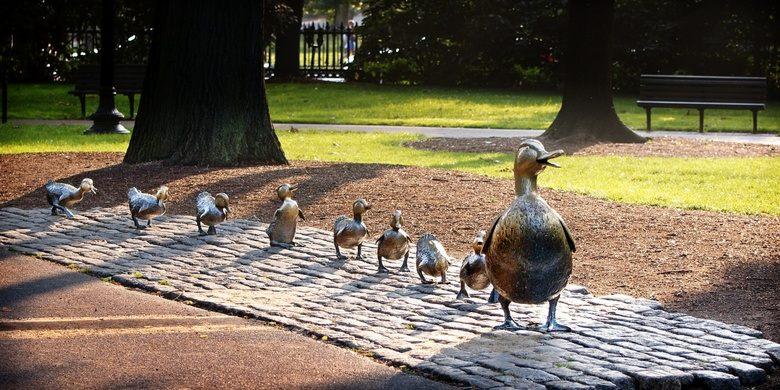 Mrs. Mallard and her ducklings in Boston Public Garden