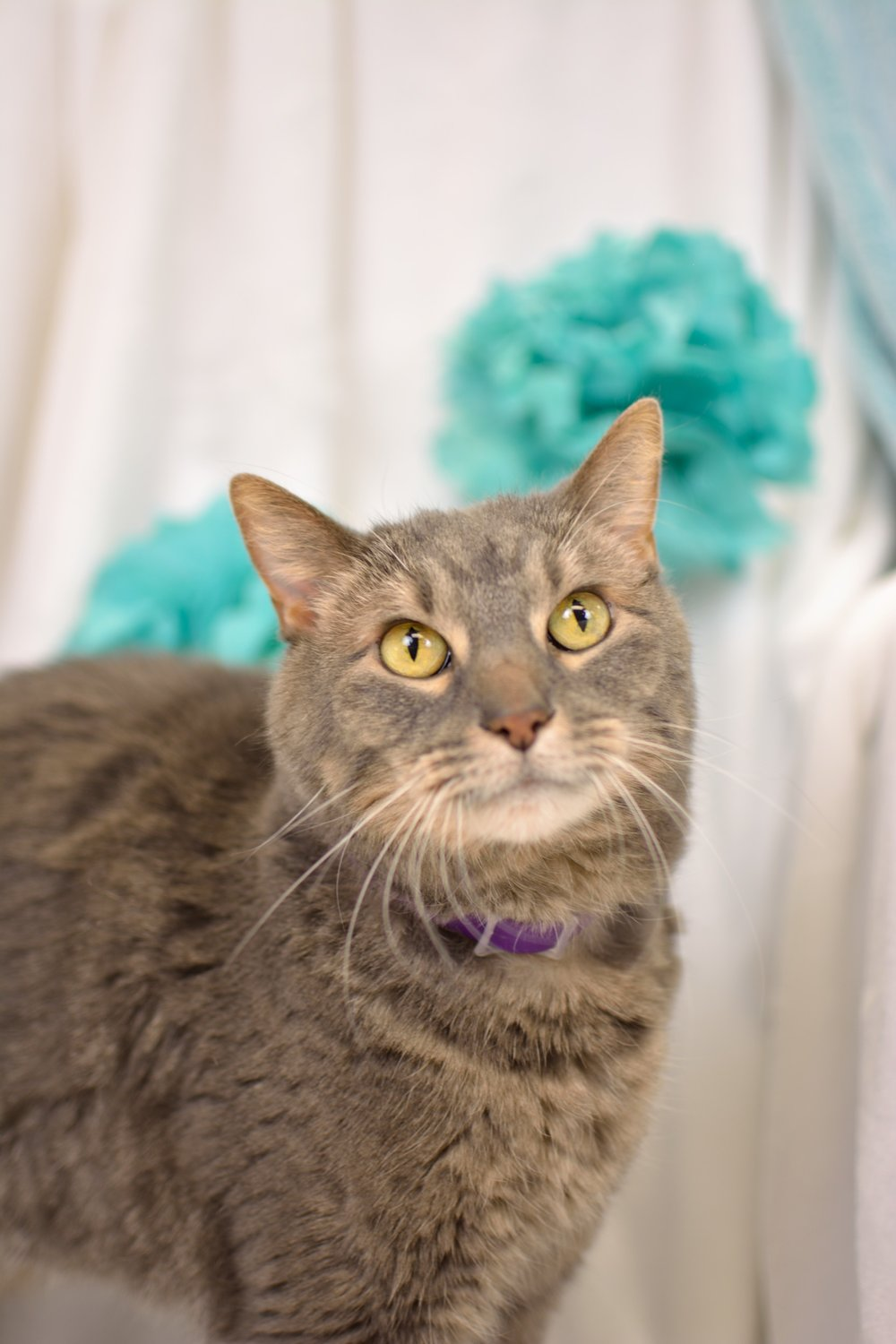 - Willow - Elmbrook Humane Society Almnus