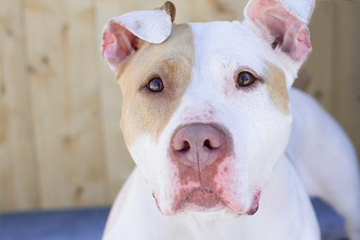 Mya - Available for adoption at  Elmbrook Humane Society