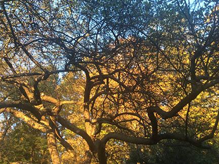 treetopsm