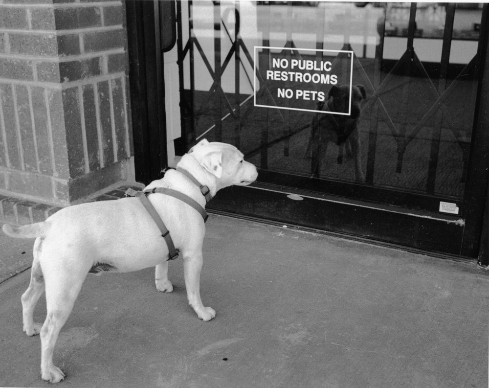 What's a dog to do?  While walking Lucky, I came upon this sign, and asked him to pose. After a couple of years, he was used to these requests.