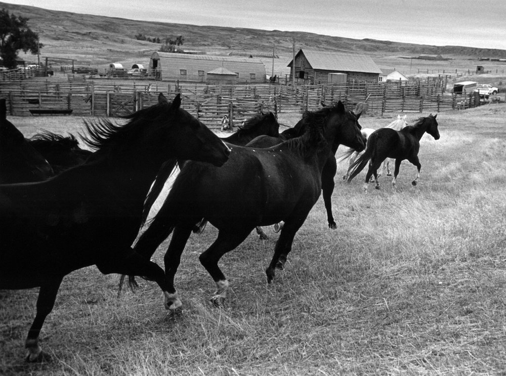 A horse is poetry in motion - author unknown.