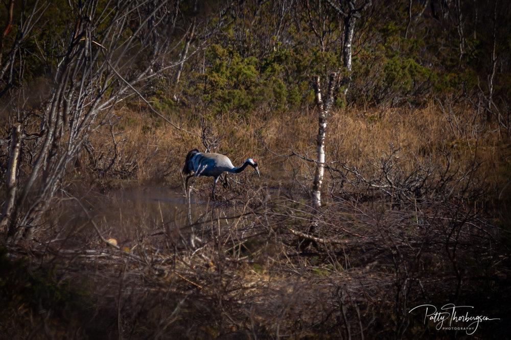 trane © Patty Thorbergsen-1.jpg